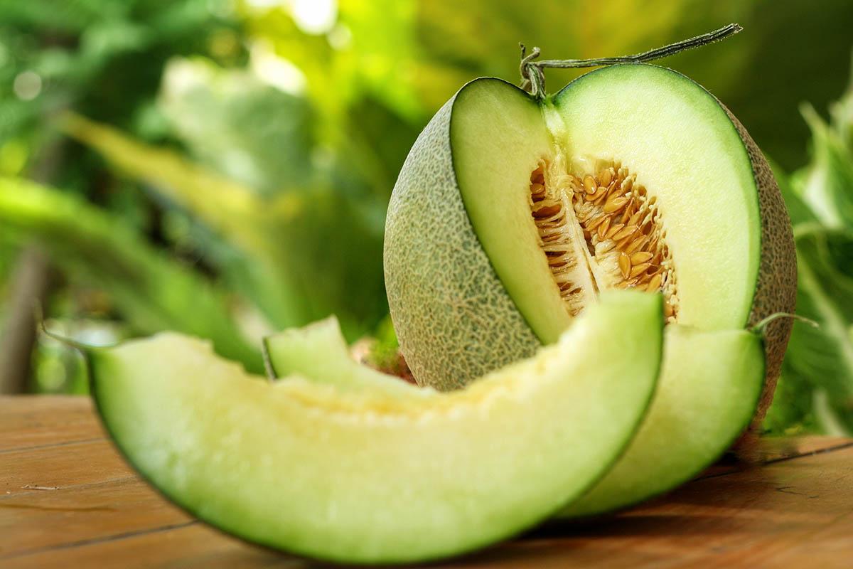 Nutmeg Melon